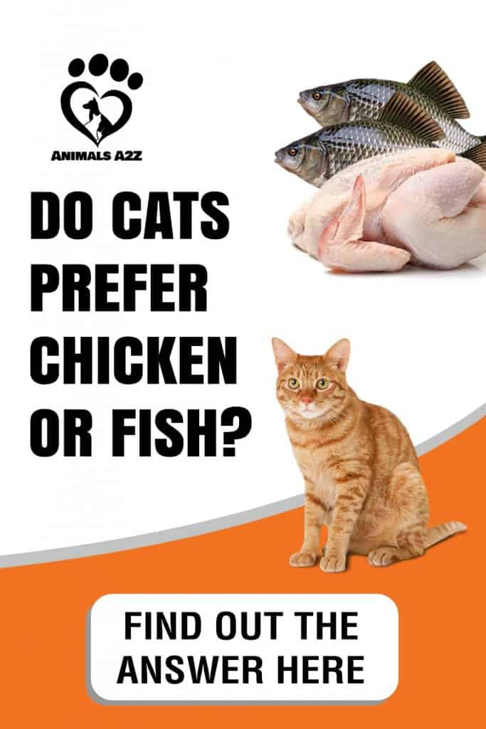Do cats prefer chicken or fish?