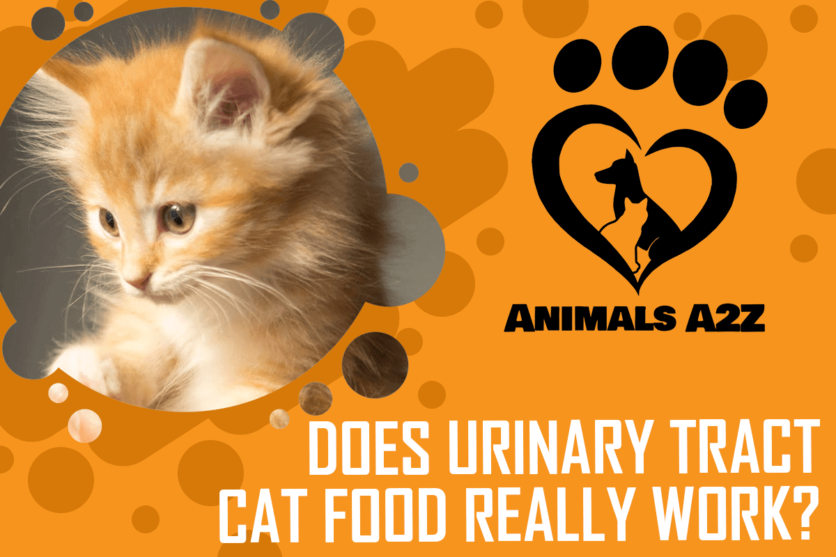 Does urinary tract cat food really work