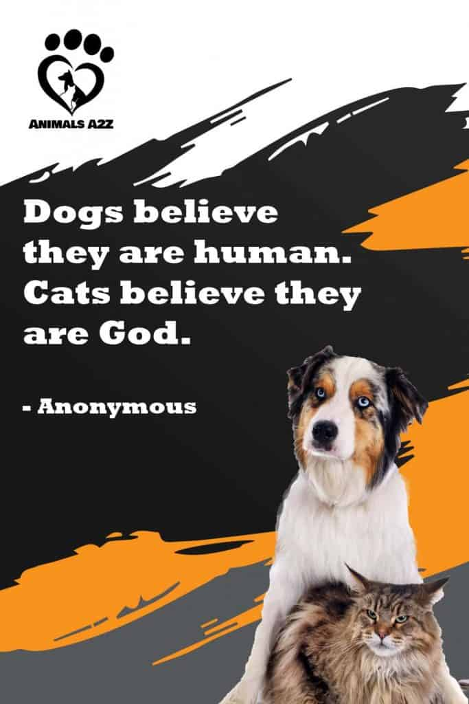 Dogs believe they are human. Cats believe they are God.