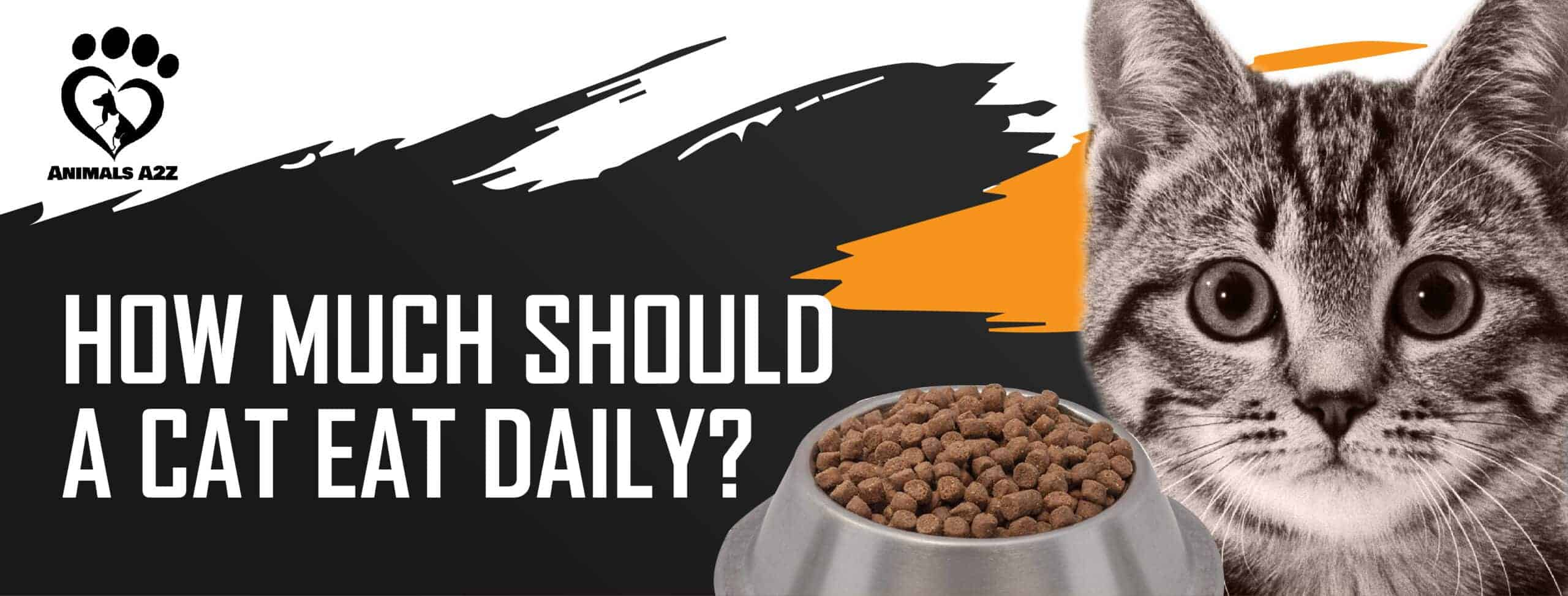 How much should a cat eat daily