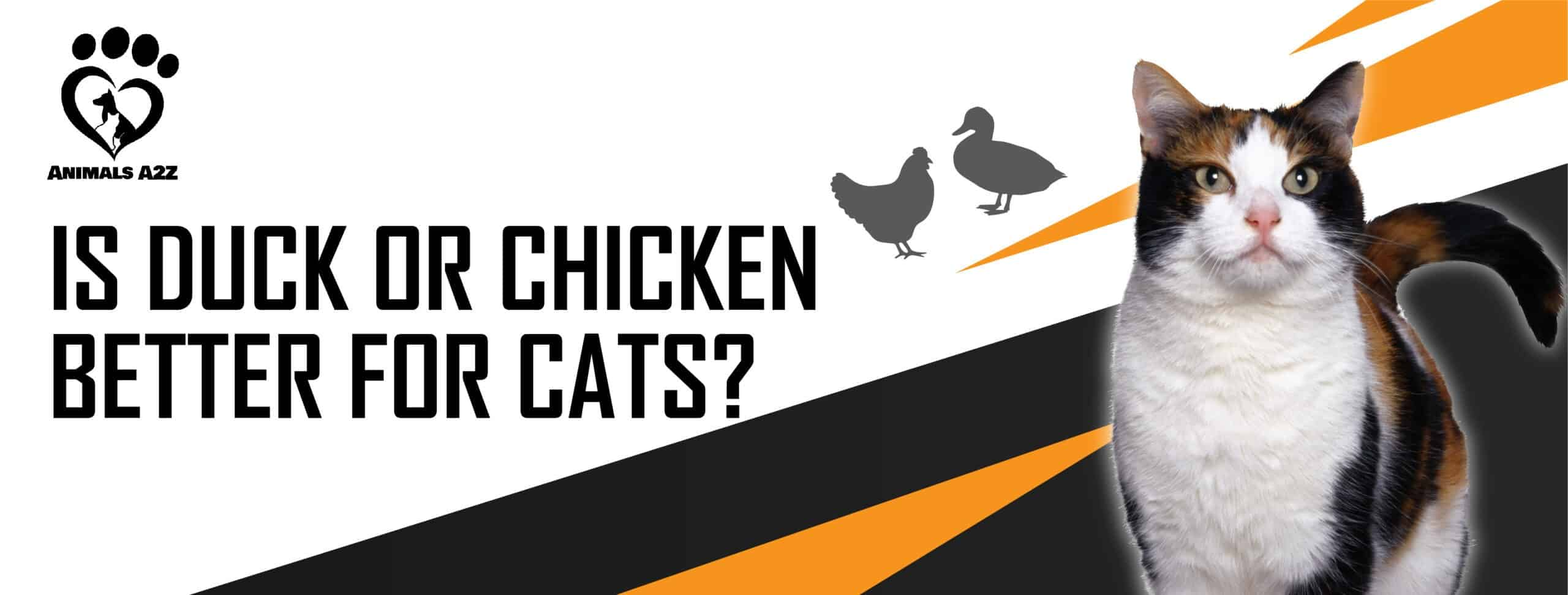 Is duck or chicken better for cats