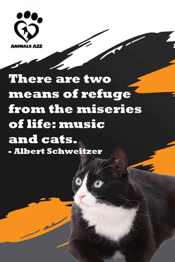 There are two means of refuge from the miseries of life: music and cats - Albert Schweitzer
