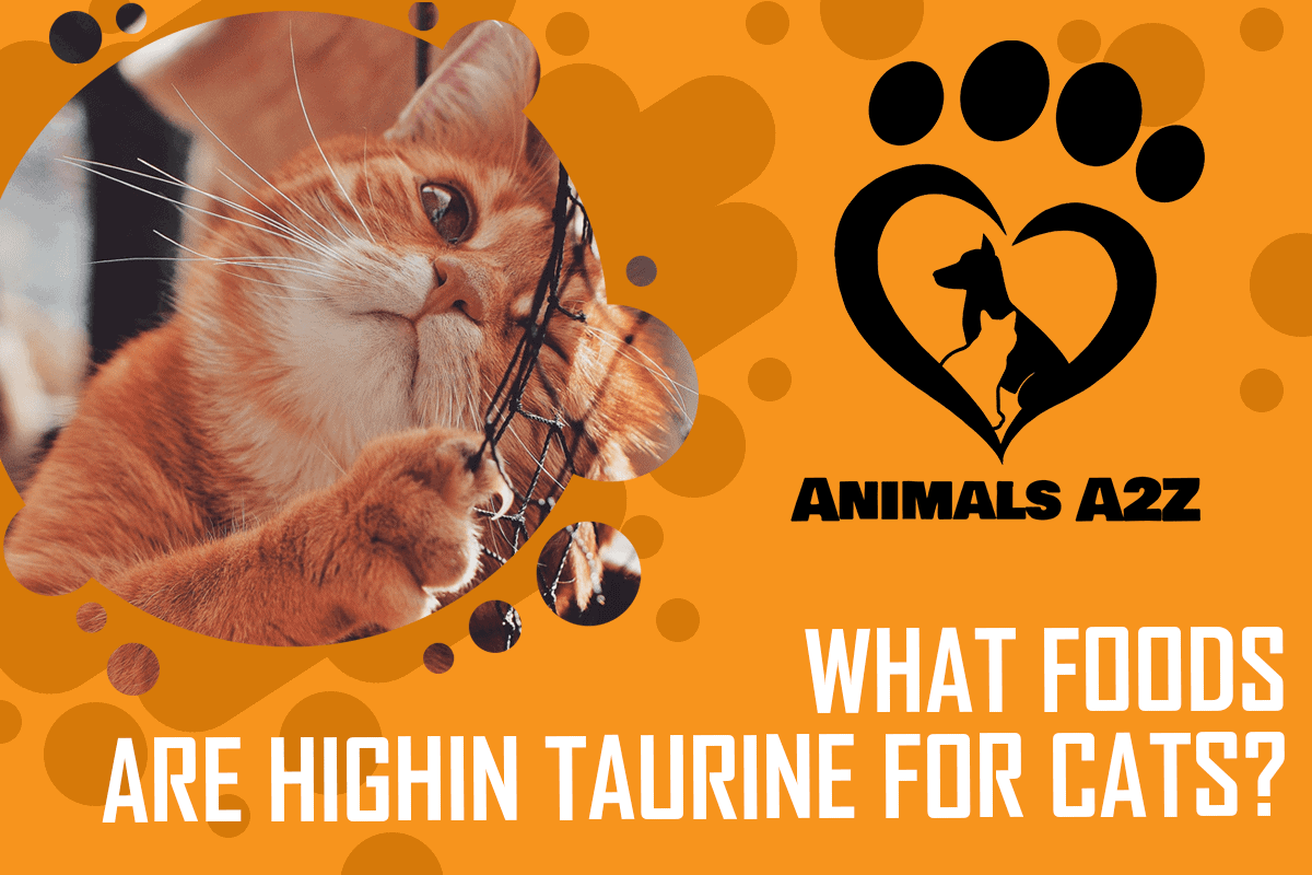 What foods are high in taurine for cats