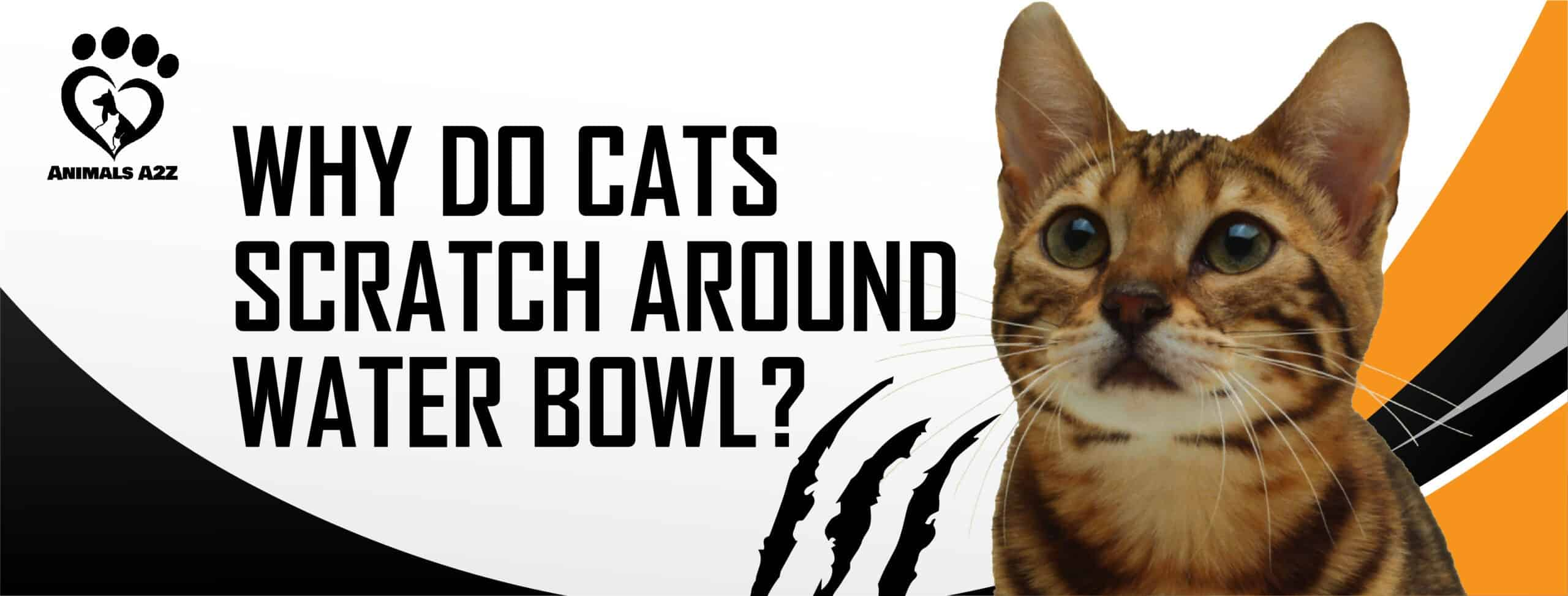 Why do cats scratch around water bowl