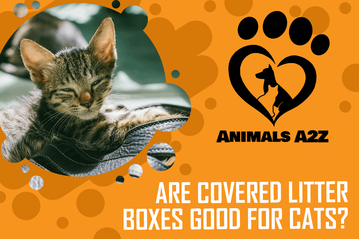 Are covered litter boxes good for cats?