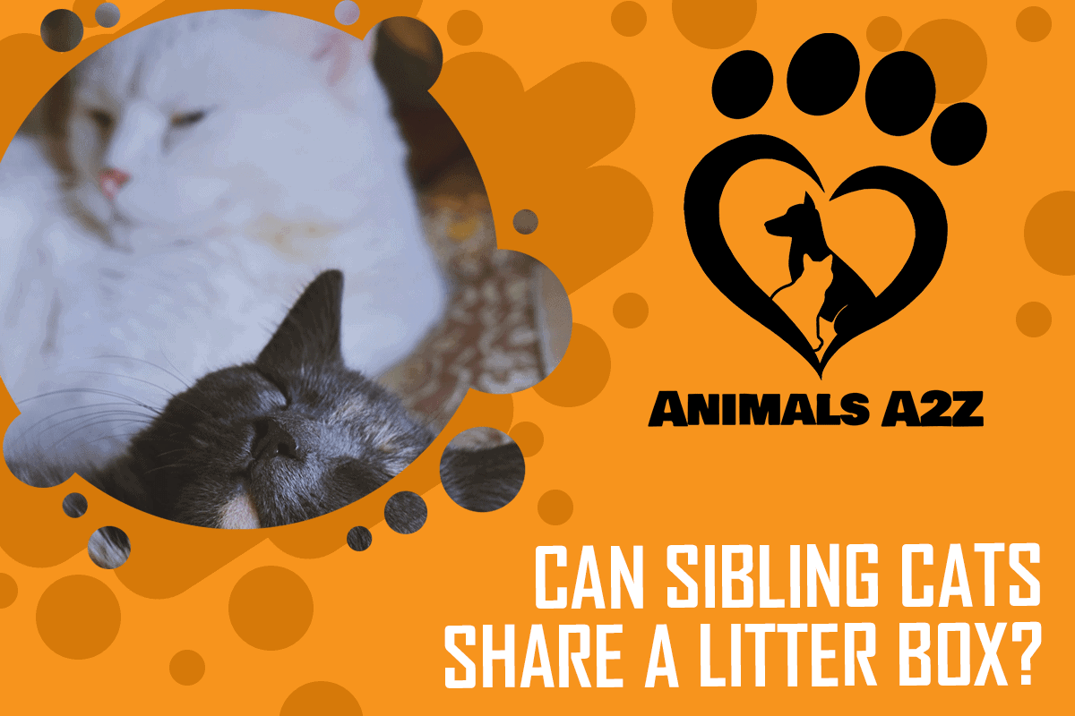 Can sibling cats share a litter box