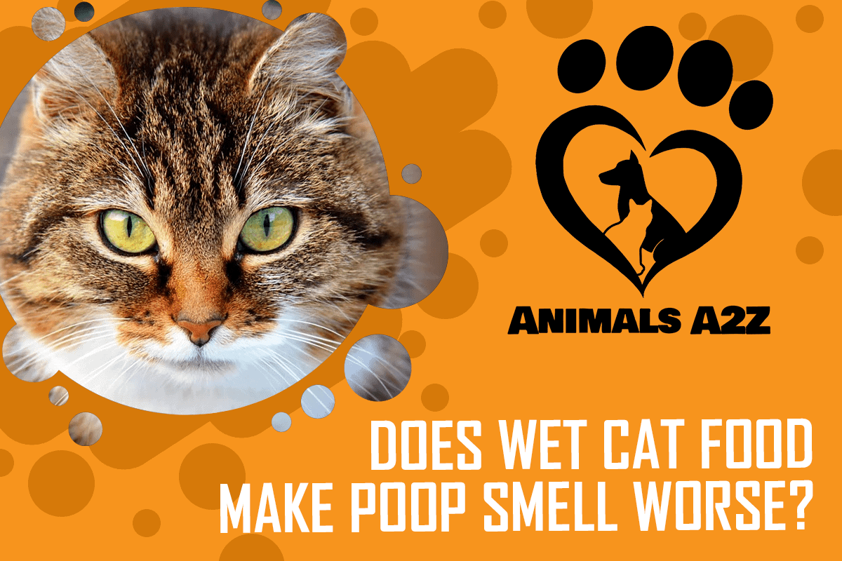Does wet cat food make poop smell worse