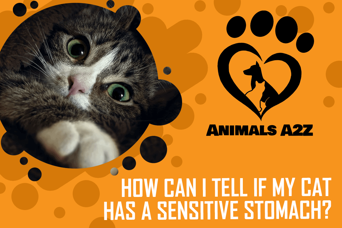 How can I tell if my cat has a sensitive stomach