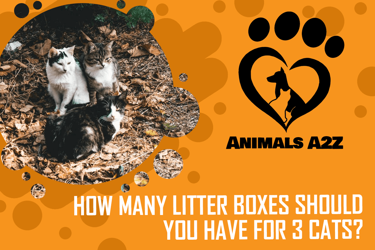 How many litter boxes should you have for 3 cats