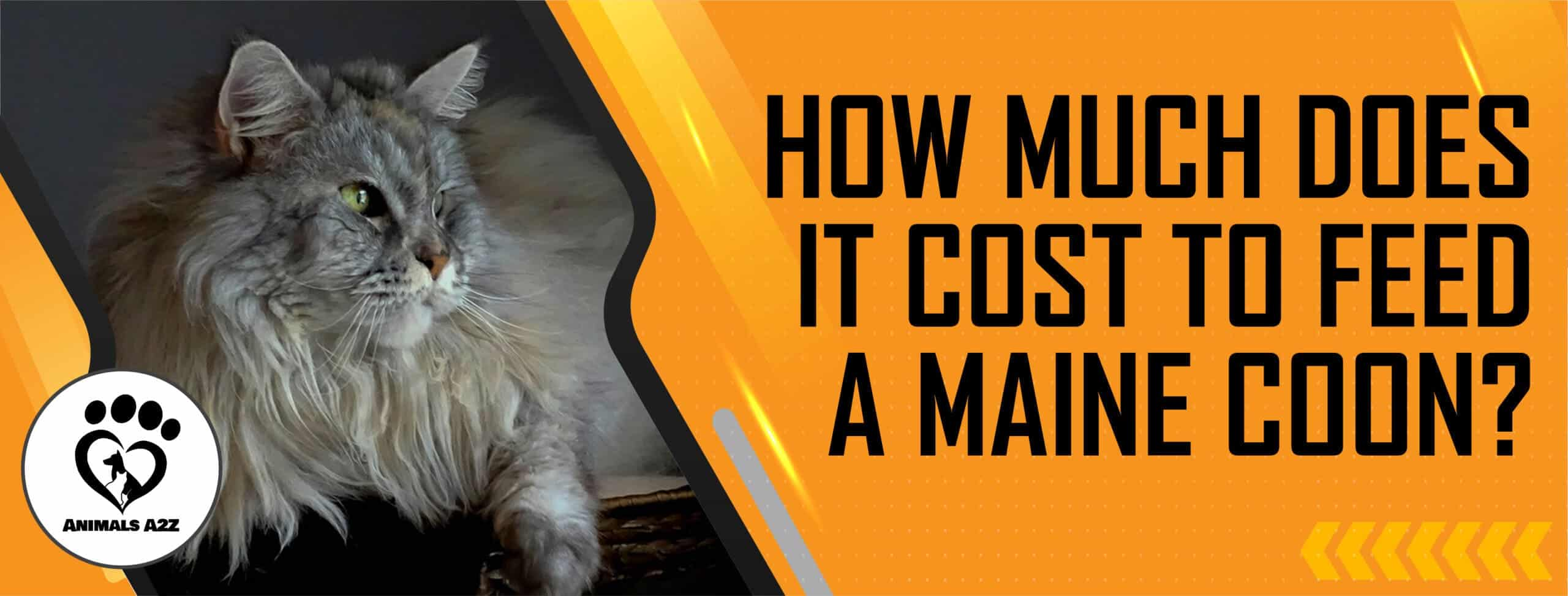 How much does it cost to feed a Maine coon?