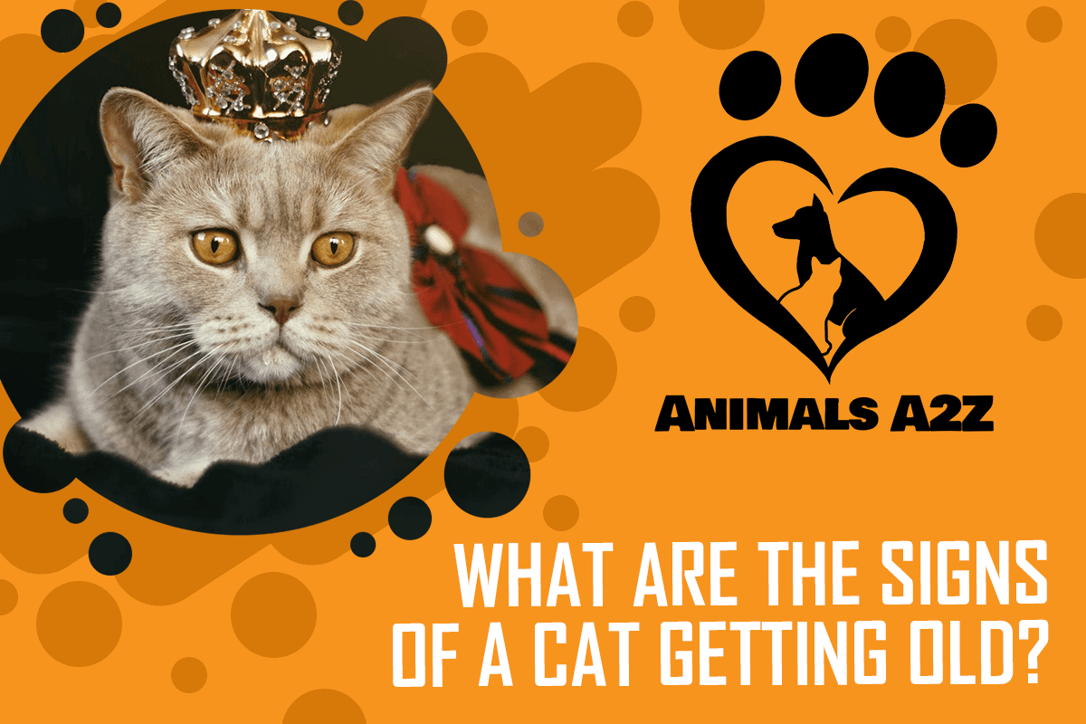 What are the signs of a cat getting old