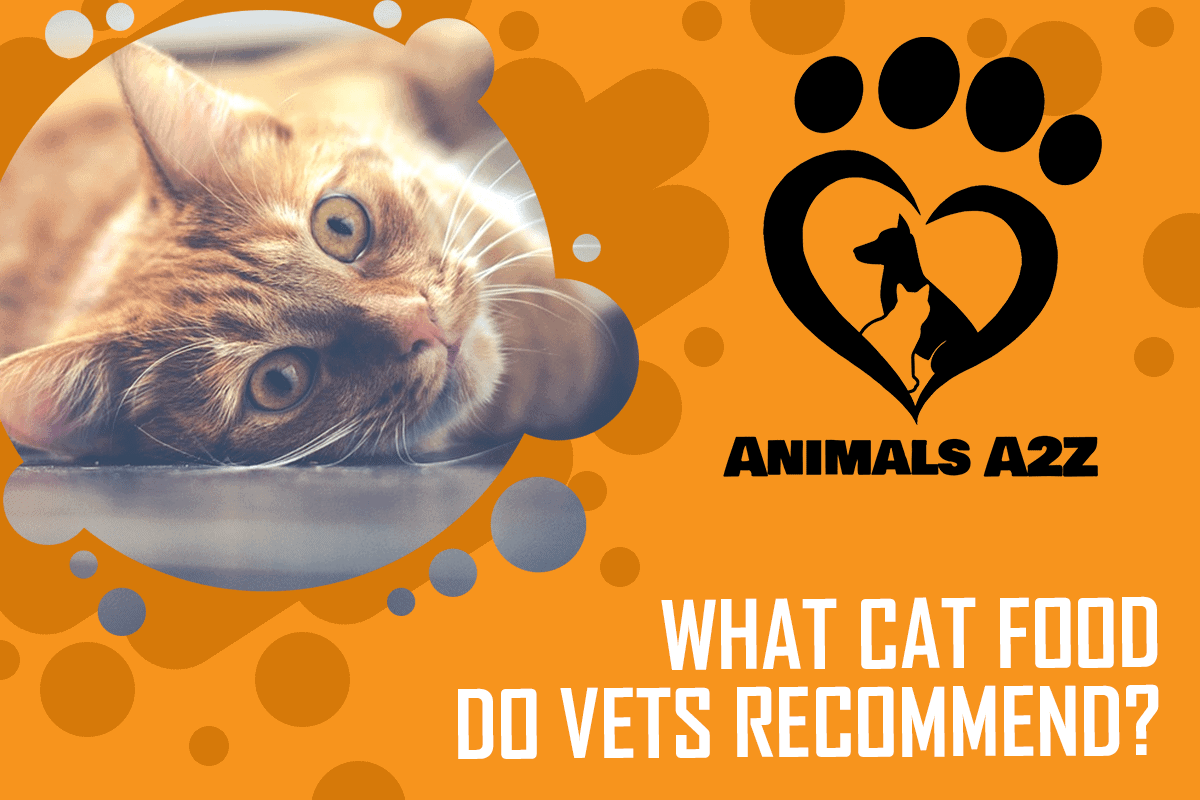 What cat food do vets recommend