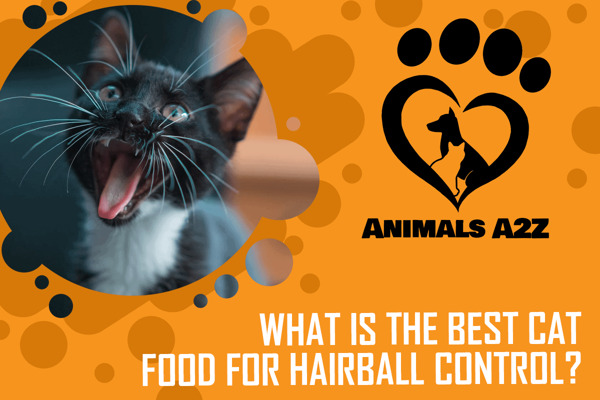 What is the best cat food for hairball control
