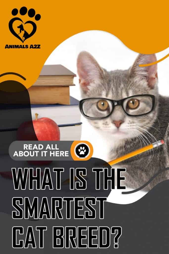 What is the smartest cat breed?