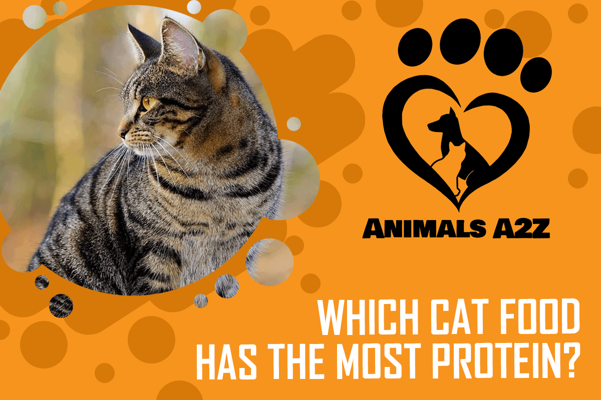 Which cat food has the most protein