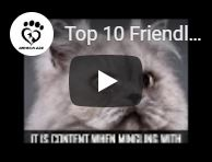 Friendliest cat breeds video
