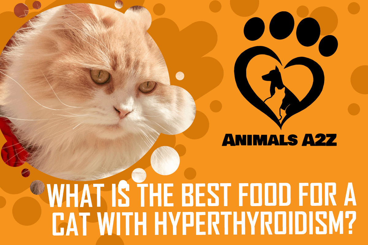 what is the best food for a cat with hyperthyroidism