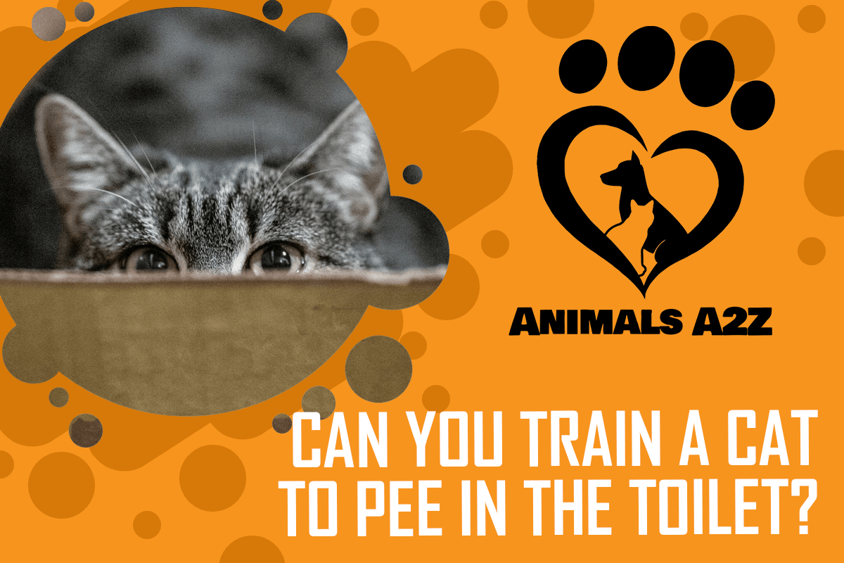 Can you train a cat to pee in the toilet