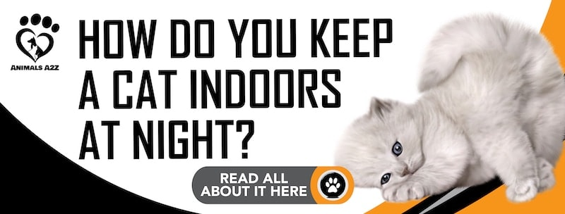 How do you keep a cat indoors at night?