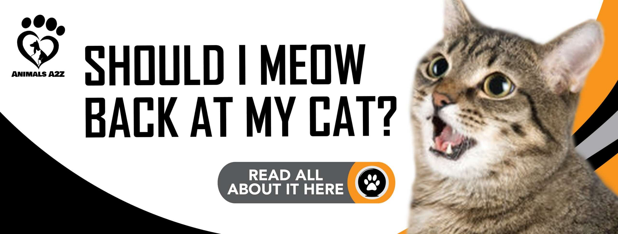 Should I meow back at my cat