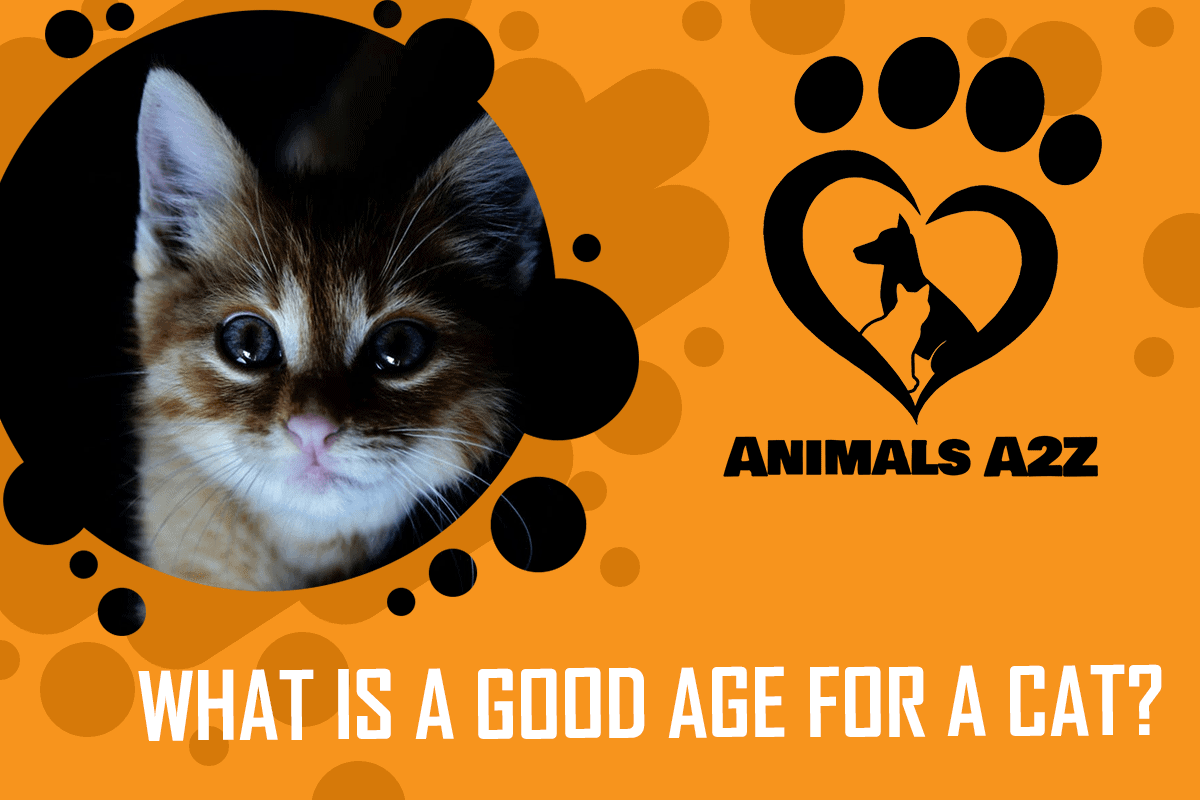 What is a good age for a cat