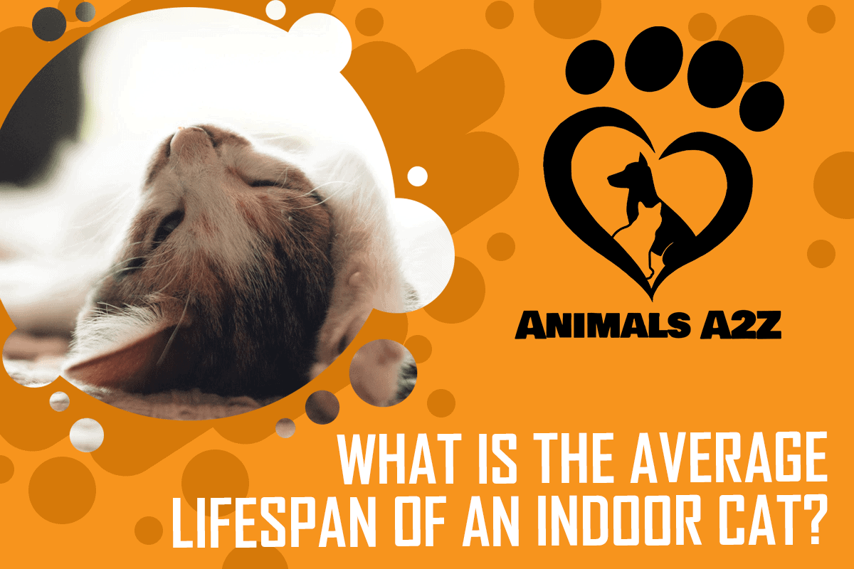 What Is The Average Lifespan Of An Indoor Cat Detailed Answer