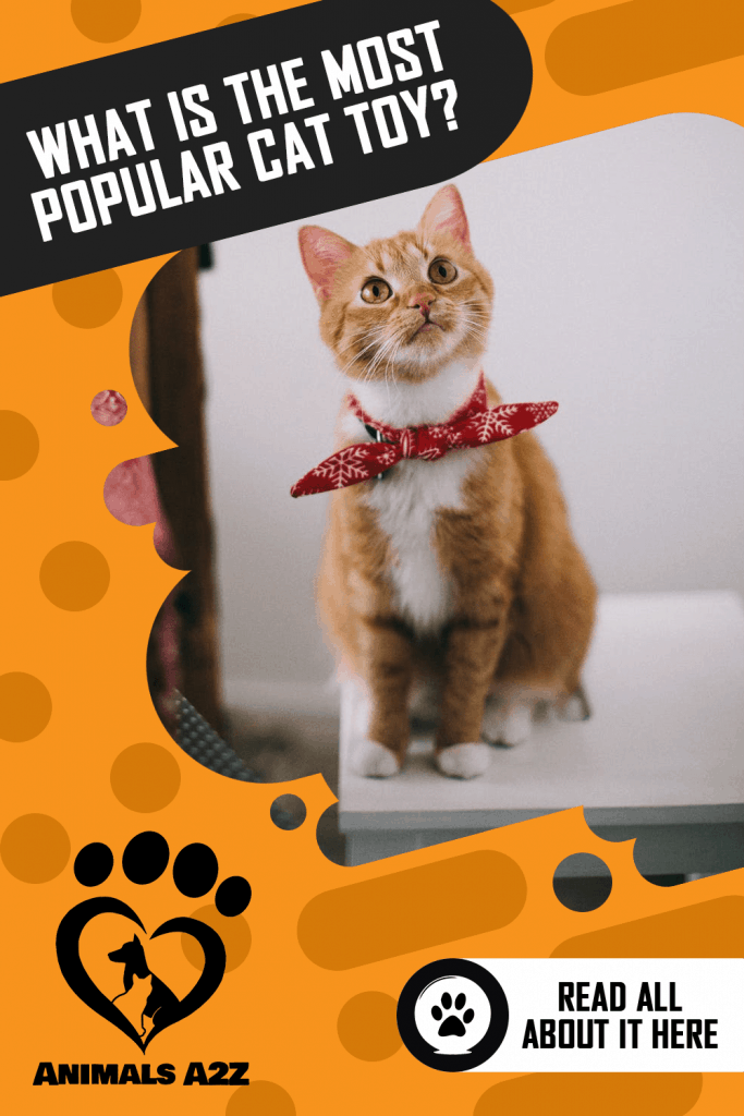What is the most popular cat toy