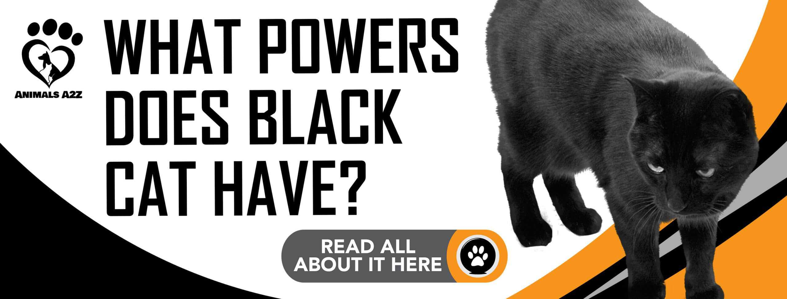 What powers does black cat have