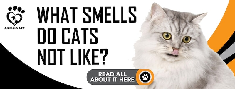 What smells do cats not like?