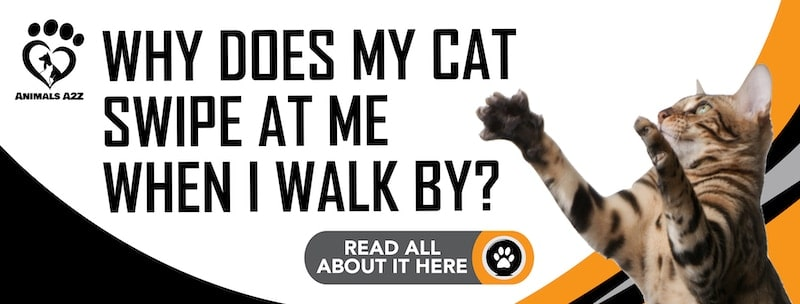 Why does my cat swipe at me when I walk by?