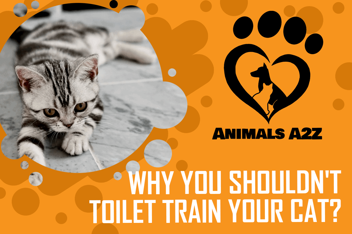 Why you shouldn't Toilet Train Your Cat