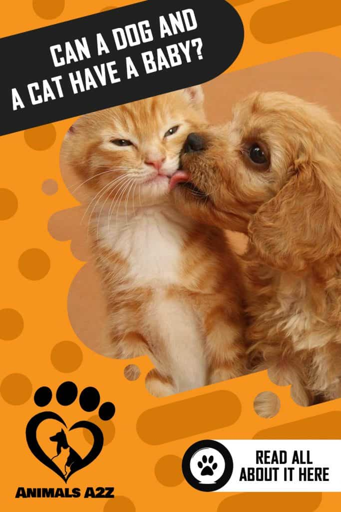 Can a dog and a cat have a baby?