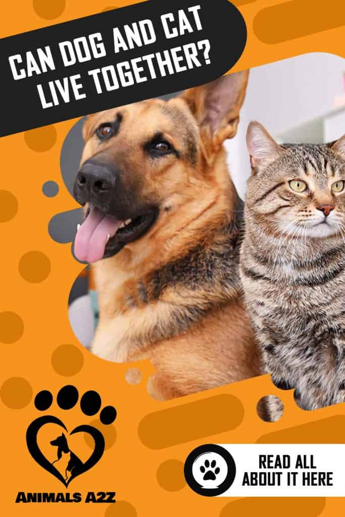 Can dog and cat live together?