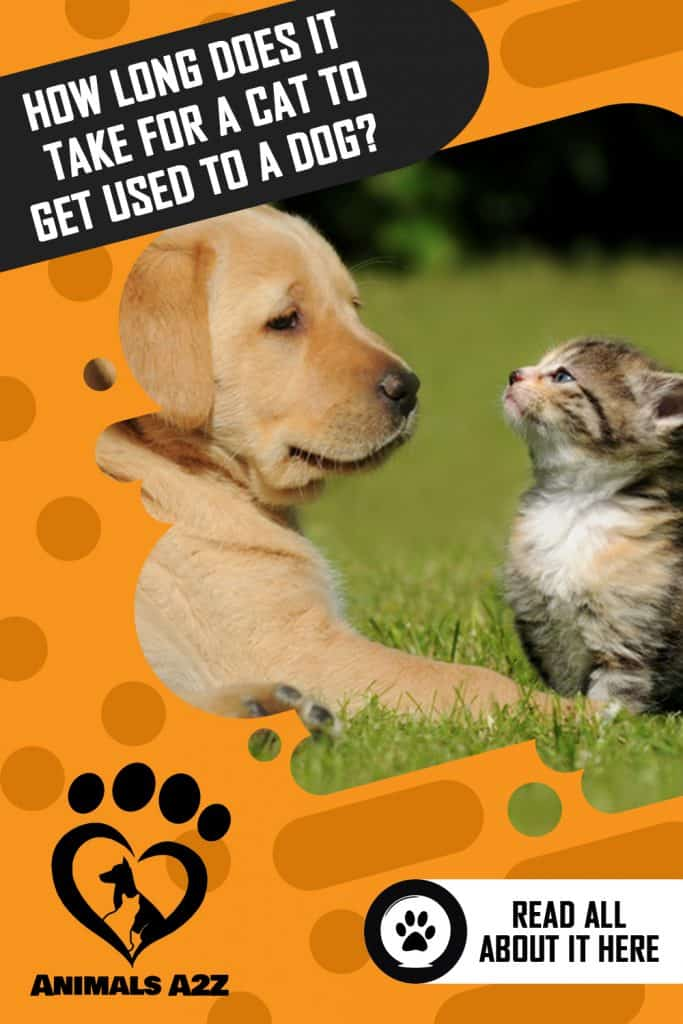 How long does it take for a cat to get used to a dog?