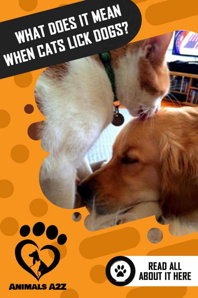 What does it mean when cats lick dogs3