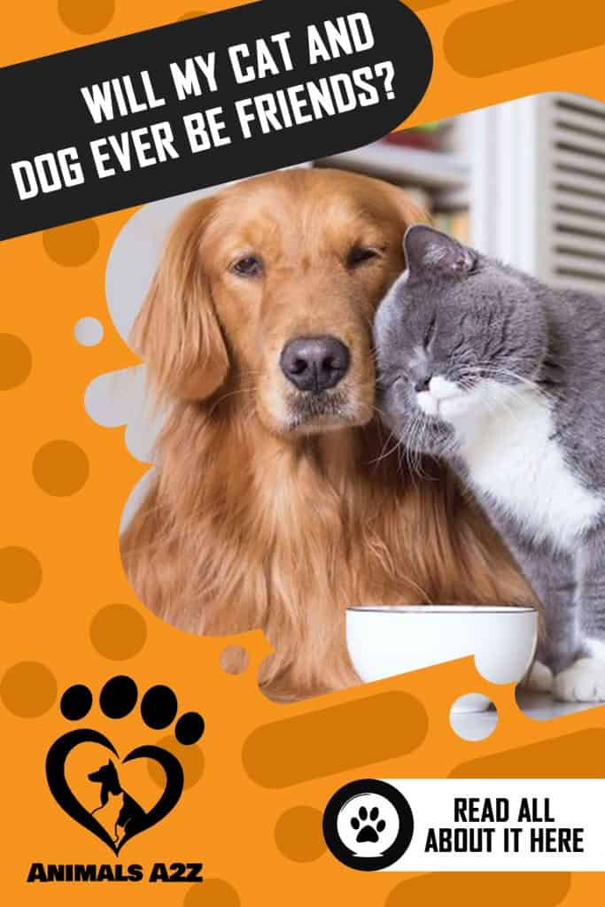 Will my cat and dog ever be friends?