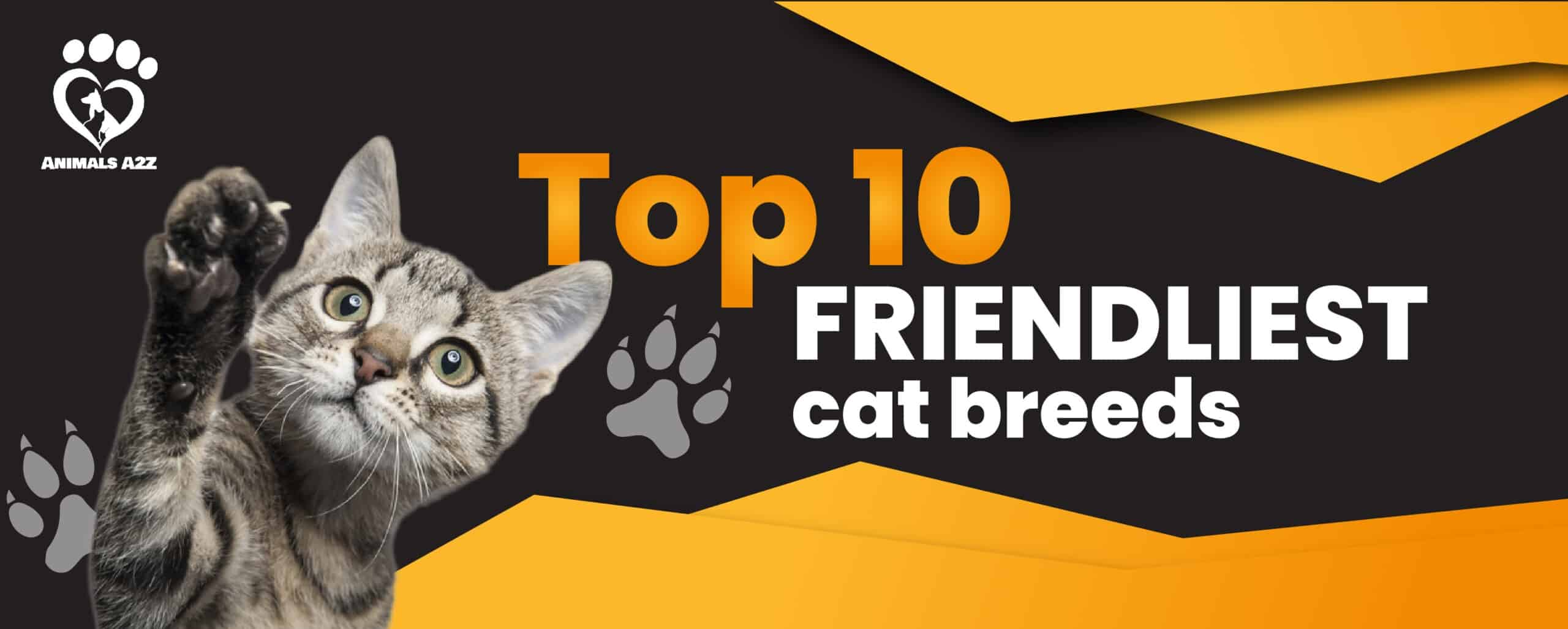top 10 friendliest cats