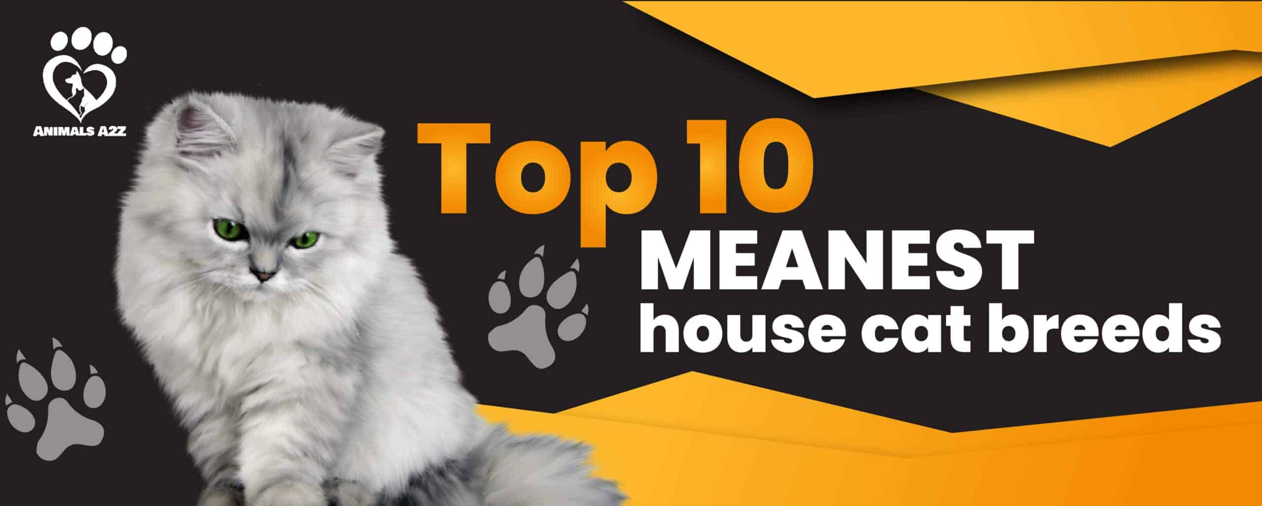 top 10 meanest cat breeds
