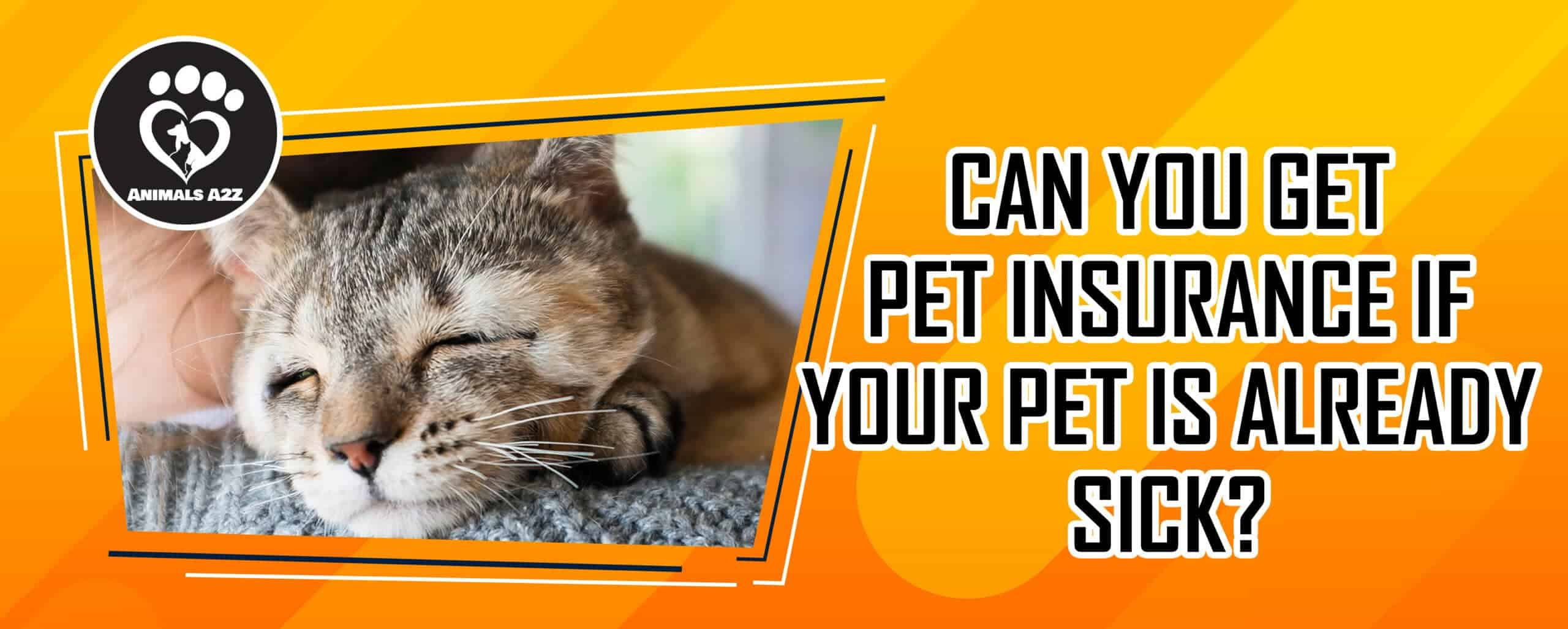 Can you get pet insurance if your pet is already sick?