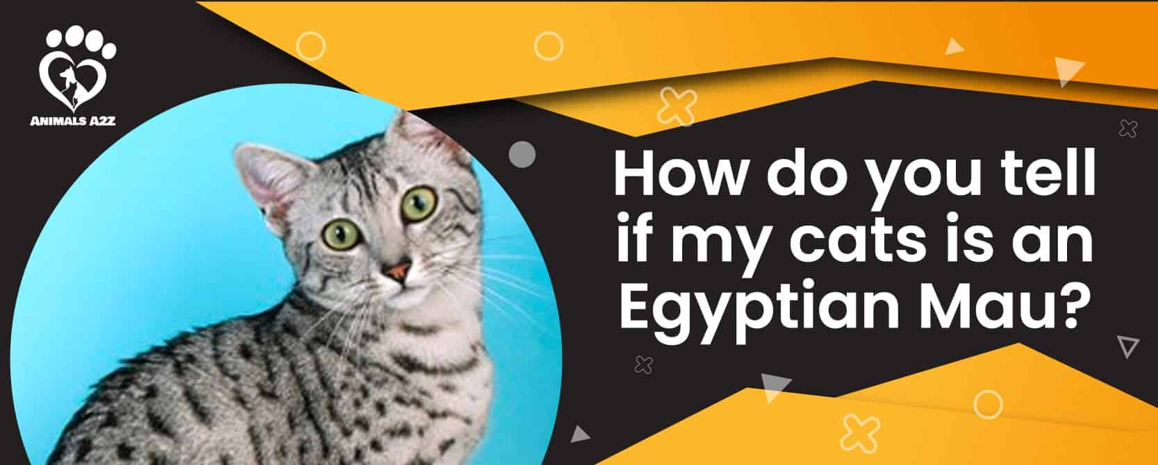 How do you tell if my cat is an Egyptian Mau?