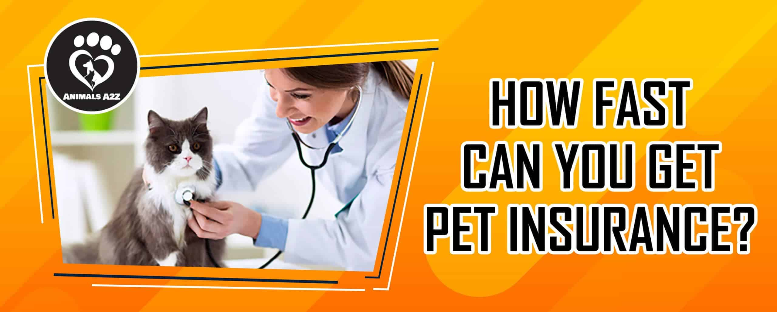 How fast can you get pet insurance?