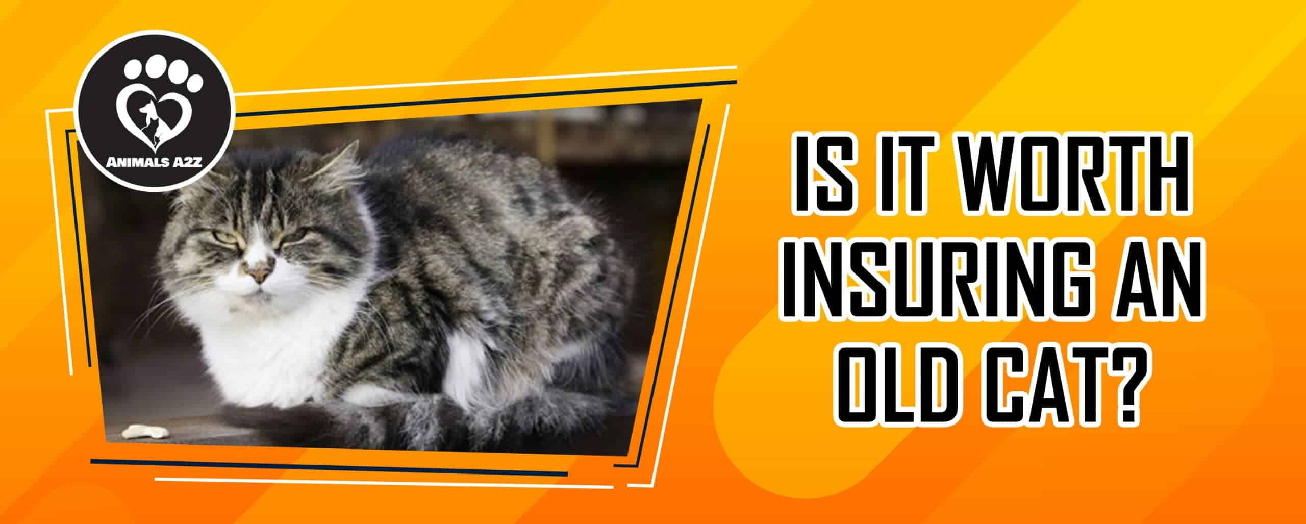 Is it worth insuring an old cat?