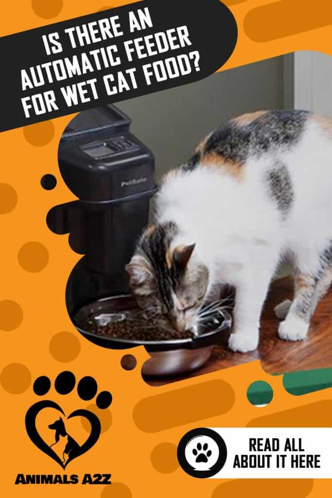 cat eating from automatic feeder.