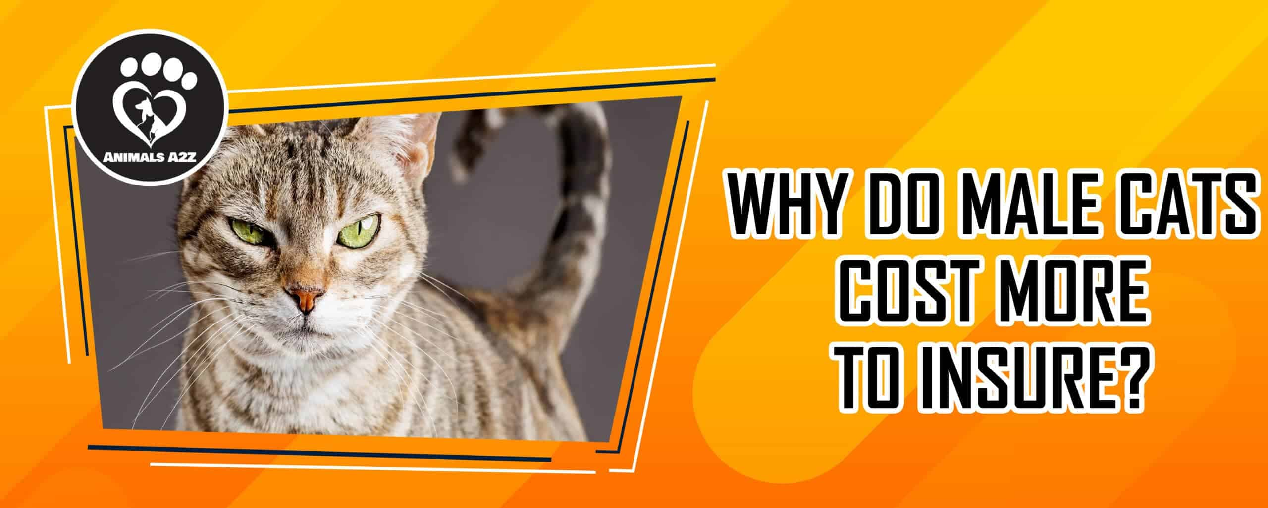 Why do male cats cost more to insure?