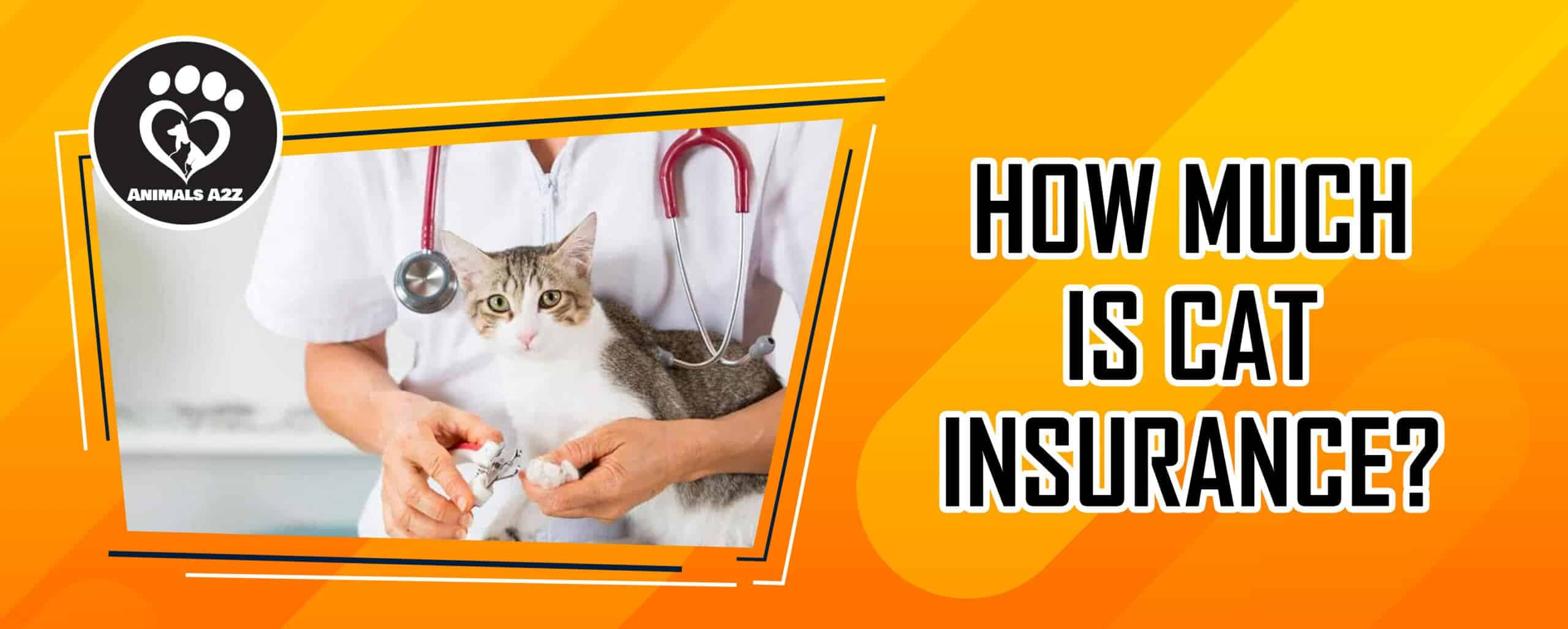 How much is cat insurance