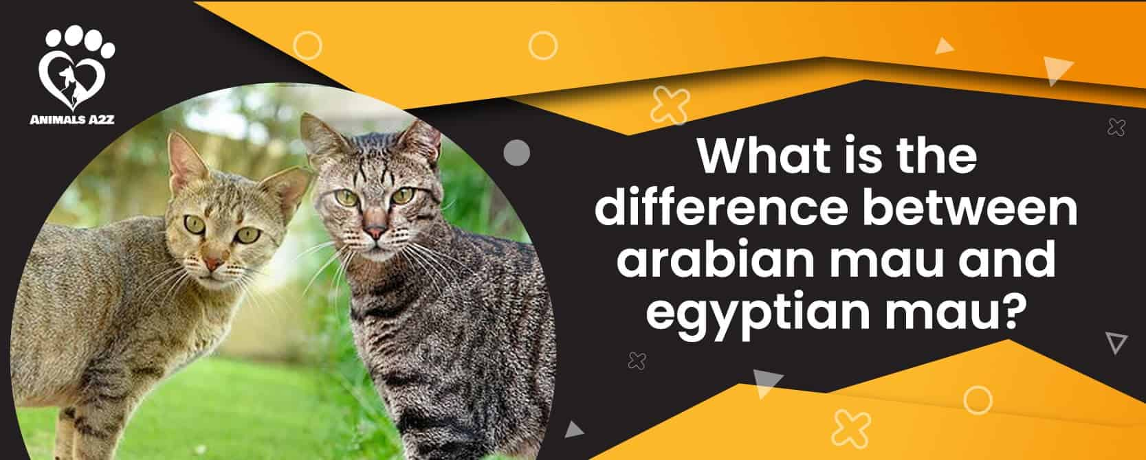 What is the difference between arabian mau and egyptian mau