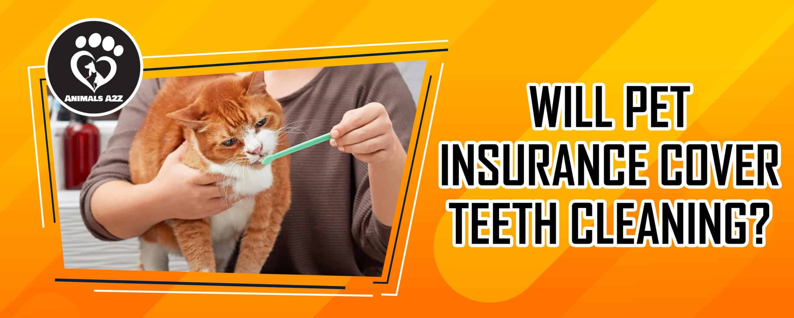 Will Pet Insurance Cover teeth cleaning?