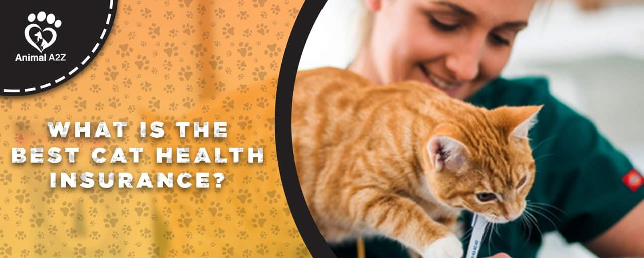 What is the best cat health insurance?