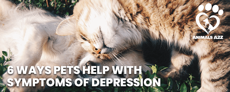 6 ways pets help with symptoms of depression