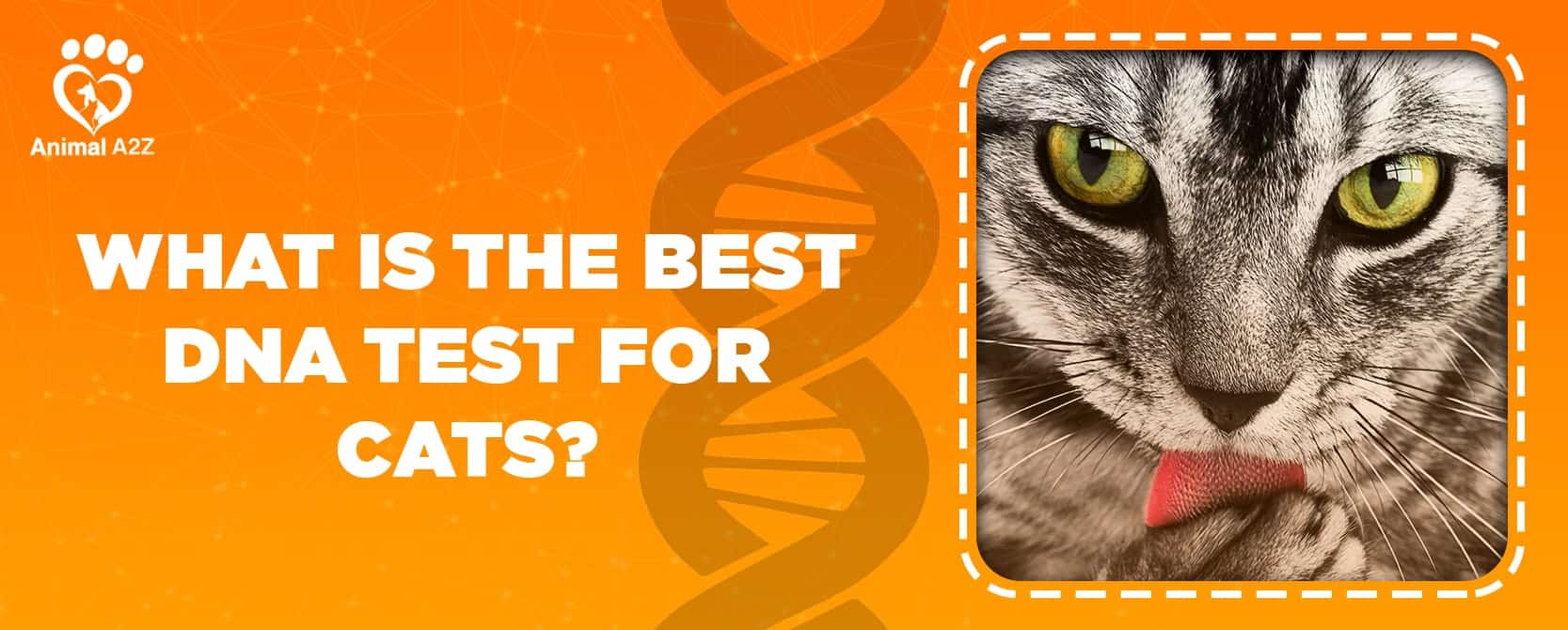 What is the best dna test for cats